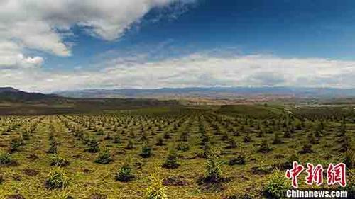 青海2017年国土绿化面积突破400万亩