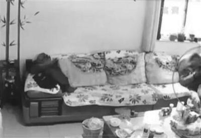"""毛贼偷探头监视孩子学习不料自家客厅反被""""直播"""""""