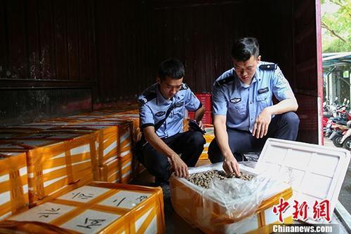 桂粵海關打掉特大走私海產品團伙涉案案值2億元