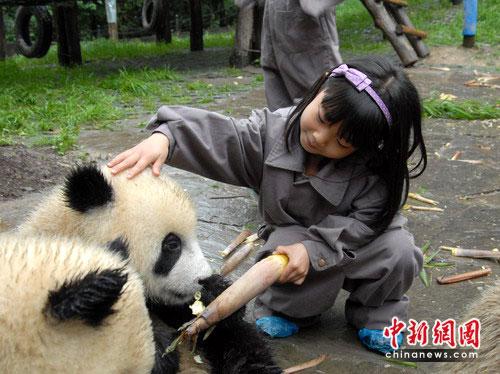 四川地震灾区儿童与大熊猫宝宝欢度儿童节(图)