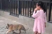 9岁女童公园遛老虎