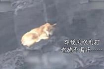 流浪狗蹲守海岸一年 任凭风吹雨打只为等生病老人回家