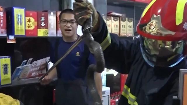 """眼镜王蛇进超市""""闲逛"""" 终被消防员擒获"""