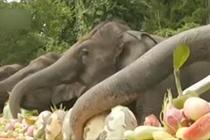 云南野象谷为大象特供3吨水果盛宴