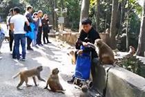 """贵州黔灵山猴子""""成精"""" 直""""抱""""游客大腿要食物"""