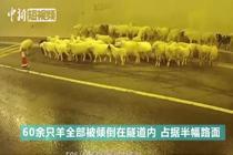 小羊堵隧道 交警高速排险情