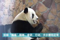 大熊猫肿瘤手术后恢复良好