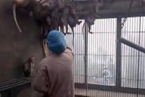 探访克隆猴团队苏州西山基地
