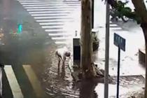 老人自发清理堵塞下水口 直到积水退去