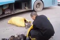 客车非法运输 暗藏野生保护动物