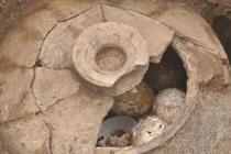 2500年前古墓挖出一罐鸡蛋