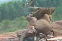 三头亚洲象被困蓄水池 一头被同伴攻击致死