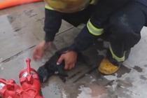 消防队员火场勇救5只小狗