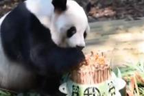大熊猫生日会 憨态可掬萌翻你