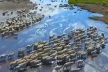 30万头牲畜转场夏季牧场
