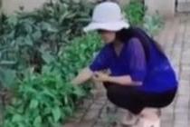 女子砖缝中种出瓜果蔬菜