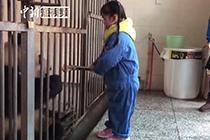 学生做窝头喂养大熊猫