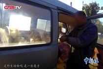 云南警方接连查处野生动物案件11起