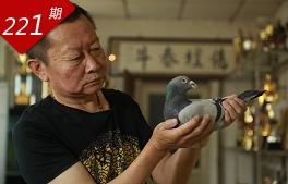 京城鸽语者