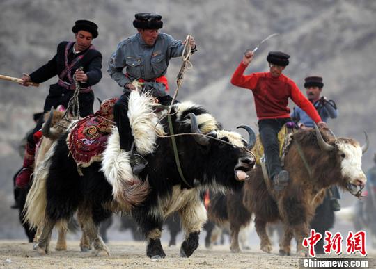 新疆帕米尔高原举行塔吉克牦牛叼羊大赛(3)