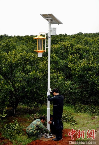 江西新余装两万盏太阳能灭虫灯 护百万亩果蔬