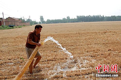河南/图为6月16日,在河南原阳县农村的田地里,记者看到农民正在...