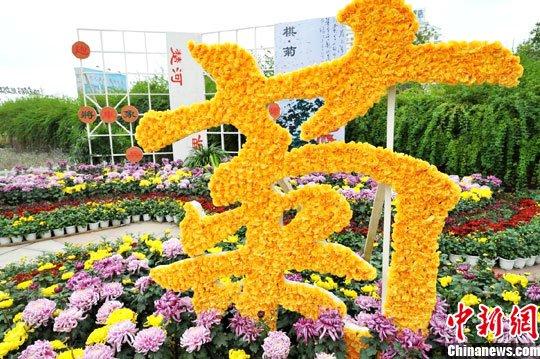 秋来正是赏菊时30万盆热博rb88体育app南昌争艳