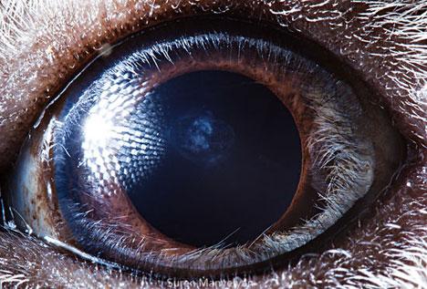 动物的眼睛(4)