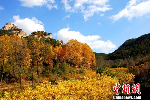 时下中国北方秋意正浓,位于山东半岛的昆嵛山国家森林公园秋色迷人.