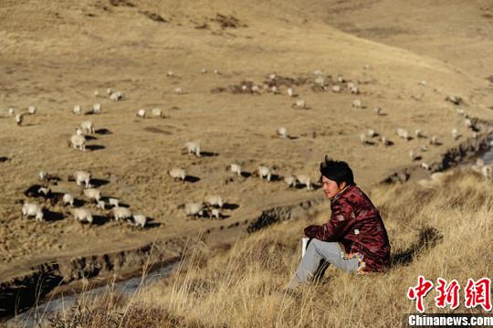 90后藏族大学生的假期生活-中新网
