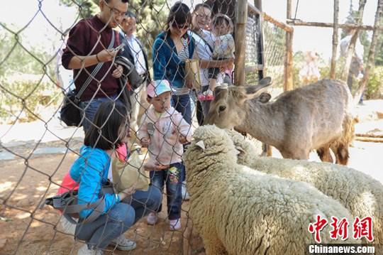 清明踏春正当时 小朋友与动物亲密接触