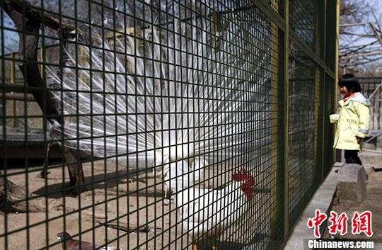 北京动物园水禽湖将设围栏 防止游客触摸鸟禽(2)