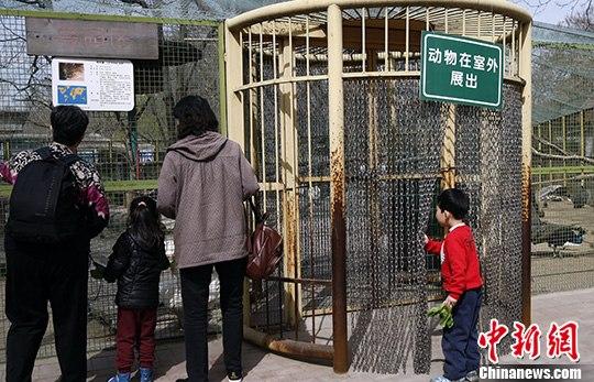 4月12日,北京动物园的儿童乐园鸟园区关闭,游客们只能在笼子外面观赏