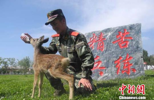 新疆边防官兵救助国家二类保护动物-中新网
