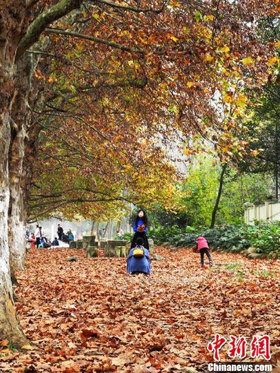 图为市民在梧桐树落叶上玩耍.中新社发 鲍光翔 摄