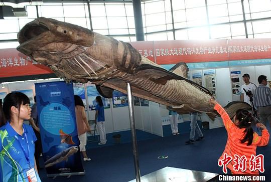 鲸鱼的身体结构图中文