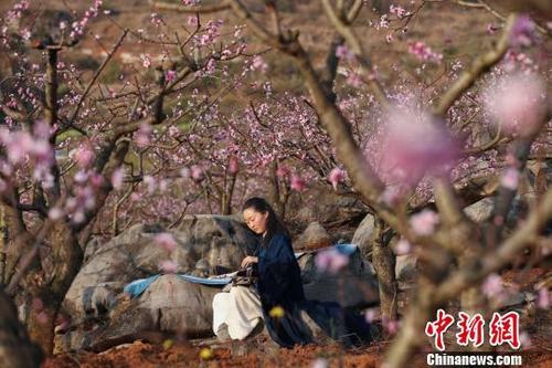 澳门金沙娱乐网址导航:贵州兴义万亩桃园抚琴赏春