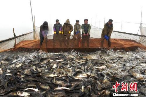 江西南昌军山湖开始冬捕 供应春