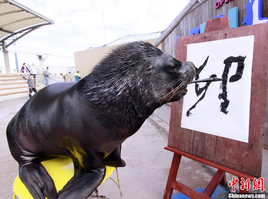 日本动物园海狮写汉字喜迎新年