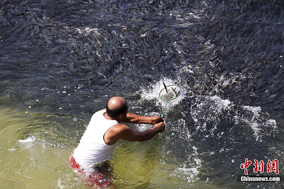 高清图集:奇观!墨西哥现巨型鱼群 或因日本地震导致
