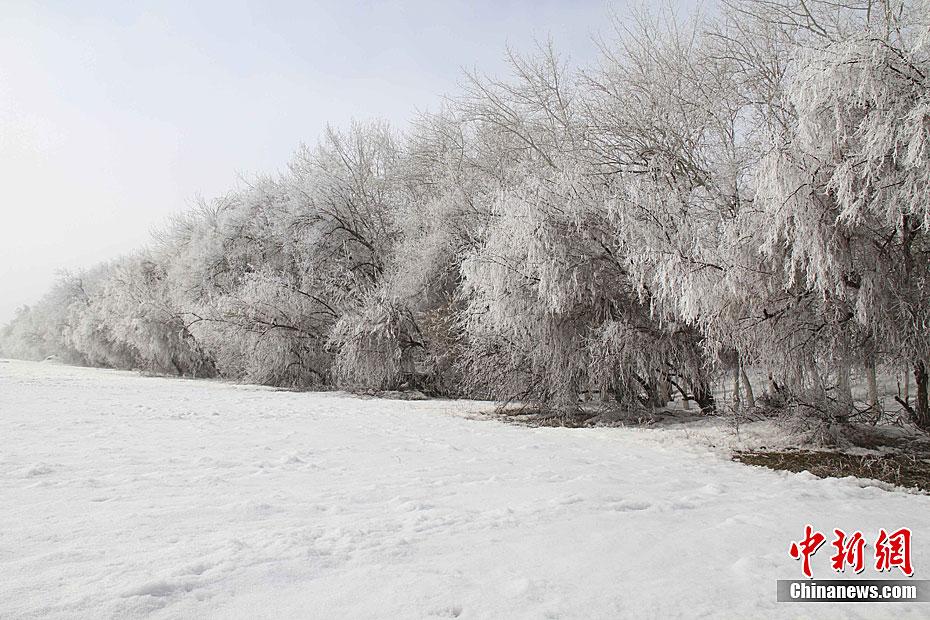 新疆阿勒泰三月天出现雾凇美景 中新网