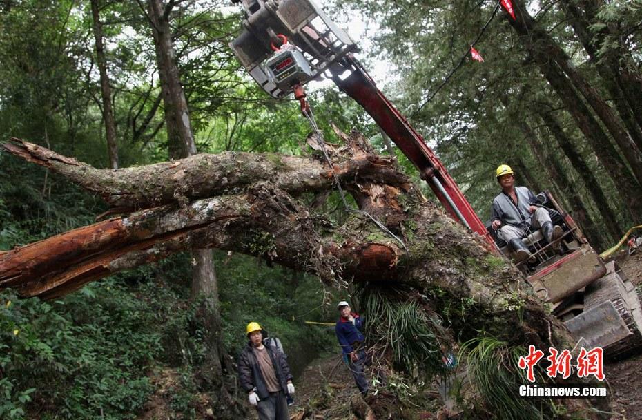 现场 阿里山/4月27日,台湾阿里山森林公园小火车翻覆,造成大陆游客伤亡。