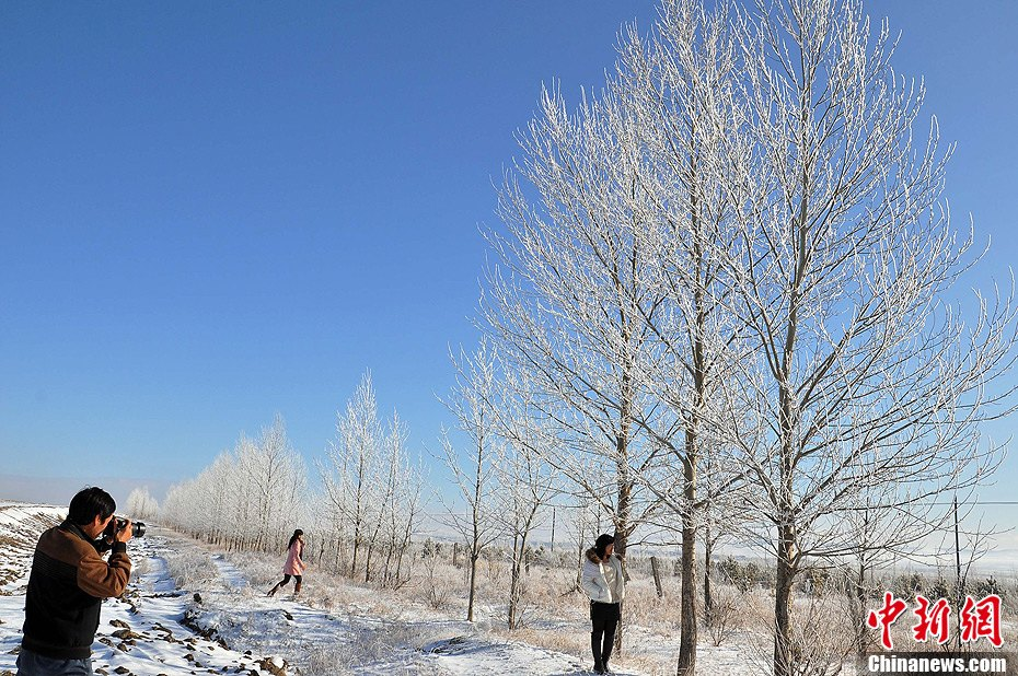 内蒙古牙克石市提早迎来雾凇美景