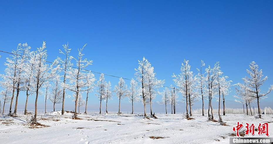 内蒙古牙克石市提前迎来雾凇美景