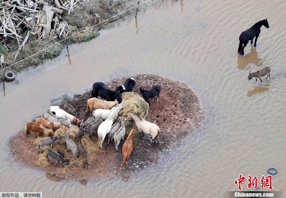 洪灾动物图片
