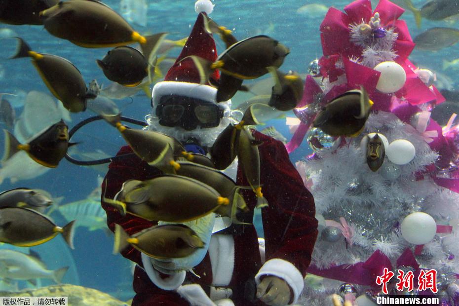菲律宾马尼拉海洋馆圣诞老人与鱼共舞