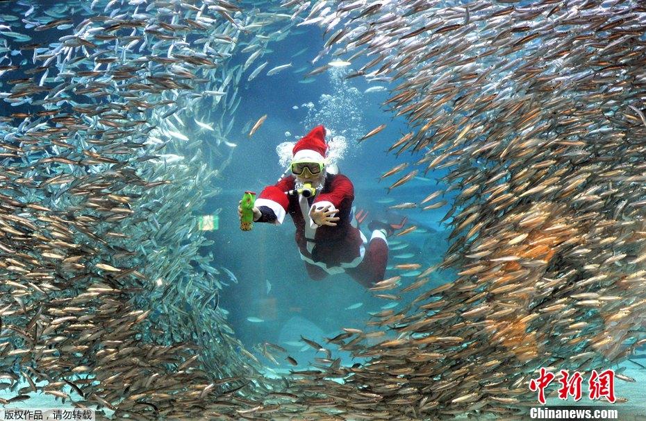 全球不一样的圣诞老人——驯鹿 - 老牛 - zhangdg37@126