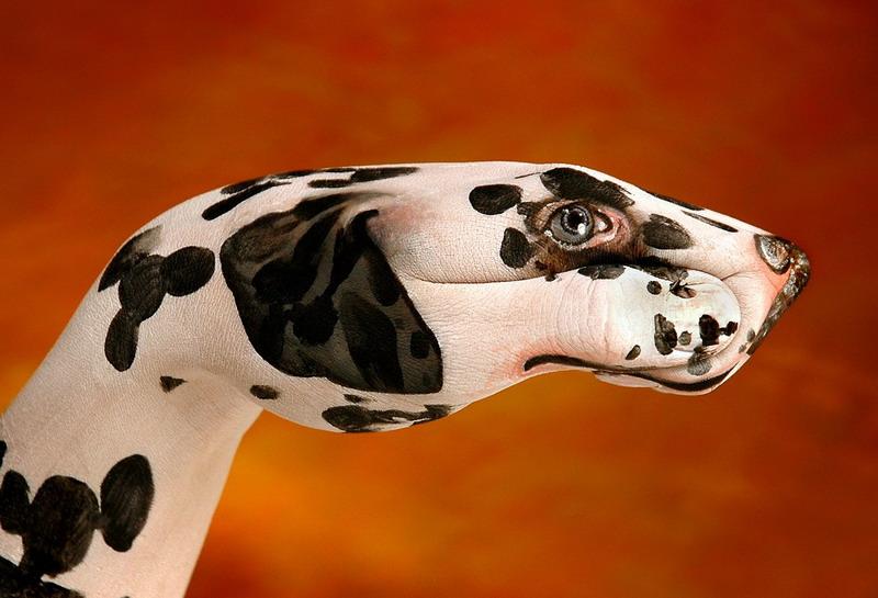 意大利人圭多达尼埃莱(Guido Daniele)是个喜欢尝试新事物的艺术家,他曾经是个油画家,经常在白纸上画素描,做过人体彩绘,现在他将艺术转移到了手上。他可以利用人手作为底板,画出各种各样让人惊叹的动物图案。图片来源:新华网