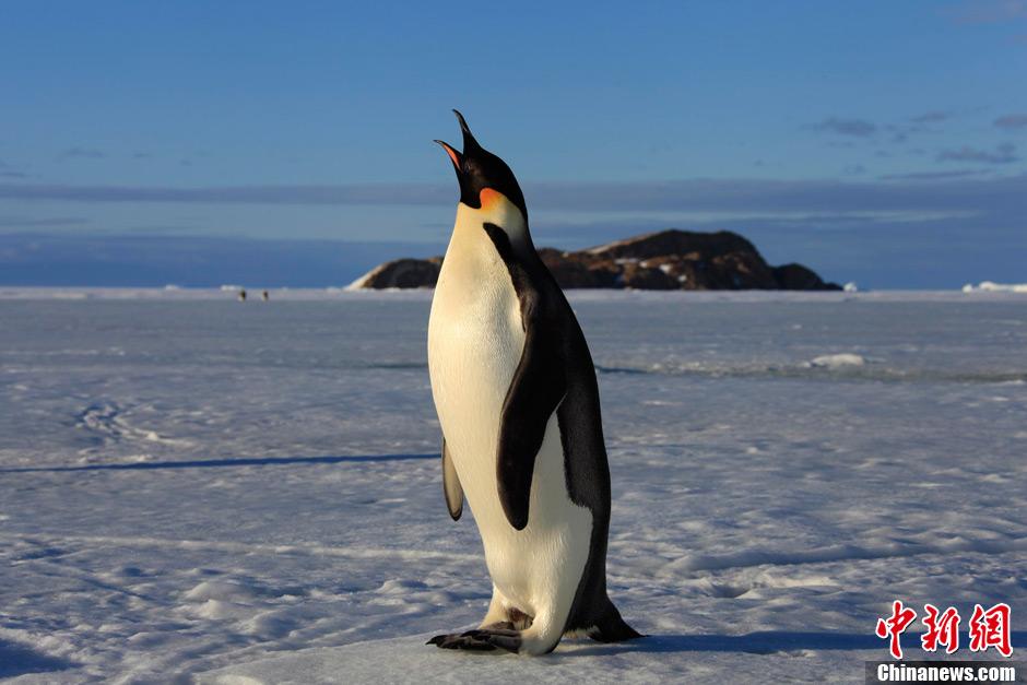南极动物冰雕之迷