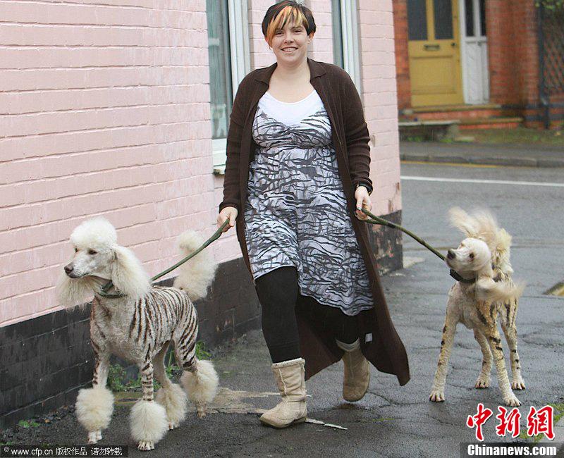 欧美 环渤海/近日,美国和英国正流行一股新的热潮,宠物狗狗被打扮成各种...